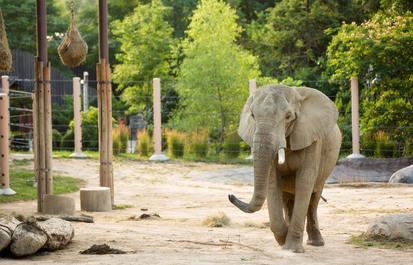 WATCH: Elevated hay feeders for elephants