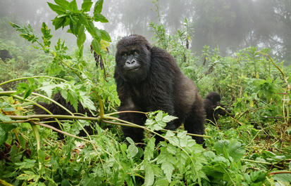 Help Gorillas on World Gorilla Day with E-Recycling