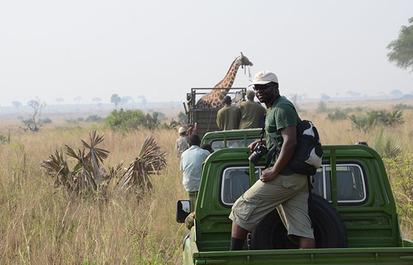 Giraffe researcher receives conservation award