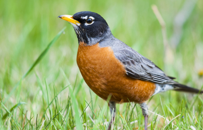 Citizen science with eBird
