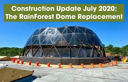Zoo News 2.0 July: The RainForest Dome Replacement Project