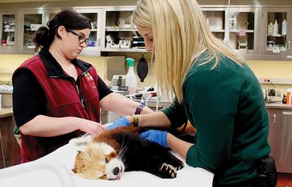 Taking Pride in Animal Care
