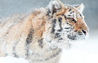 ASK THE EXPERT: What happens when there is a bad storm at the zoo?
