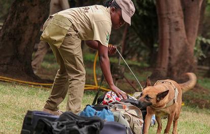 Saving Species: Combating illegal wildlife trade