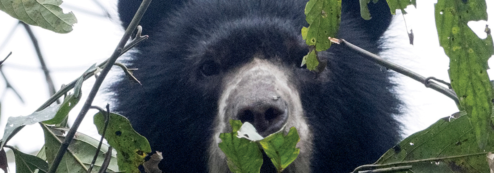 Support Andean bear conservation