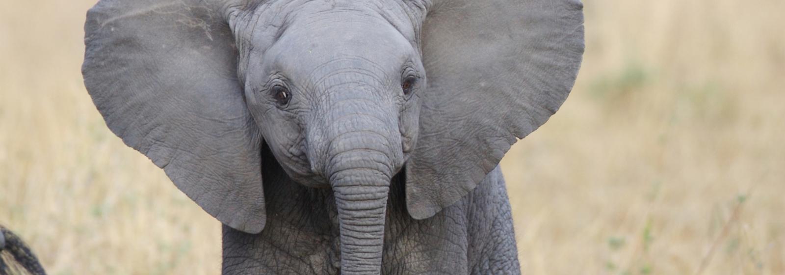 Help combat illegal wildlife trade